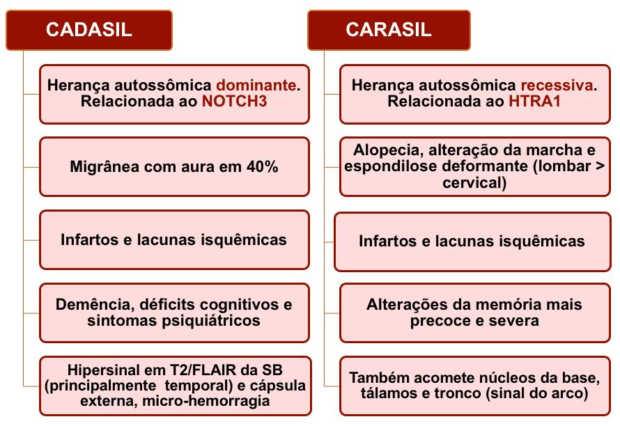 CADASIL versus CARASIL